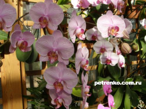 orchid-02