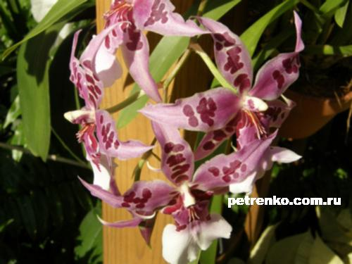 orchid-06